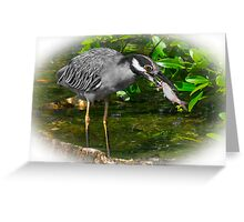 BLUE HEADED CRANE.. Greeting Card
