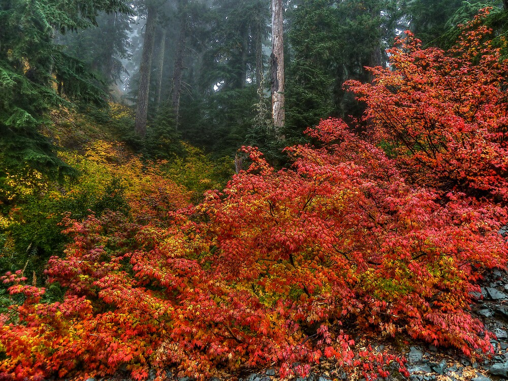 High in The Clouds ~ Fall Colors ~ by Charles & Patricia   Harkins ~ Picture Oregon