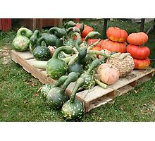 ~ Gourds? Or are they Aliens? Your Guess! ~ Photographic Print