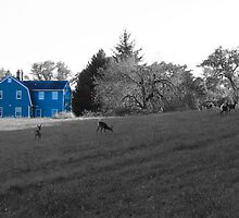 Blue House by MattyBoh424