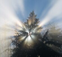 Fog and Light Rays by Brian Chase