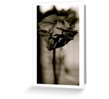 dead rose. Greeting Card