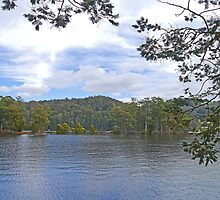 Lake Barrington, Tasmania, Australia by Margaret  Hyde