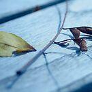 Fall 2013 by RockyWalley