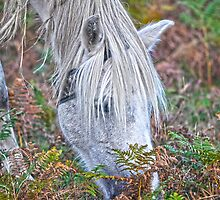 Wild White New Forest Pony Grazing on Bracken by Skye Ryan-Evans