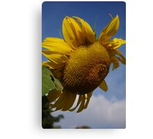 A Bright Spot on a Dull Day Canvas Print