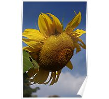 A Bright Spot on a Dull Day Poster