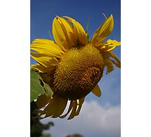 A Bright Spot on a Dull Day Photographic Print