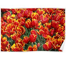 fiery spring Poster