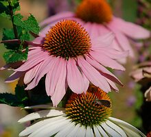 Echinacea Purpurea with Small Butterfly 1 by jojobob