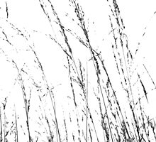 Wild Grasses Abstract in Black and White by Natalie Kinnear