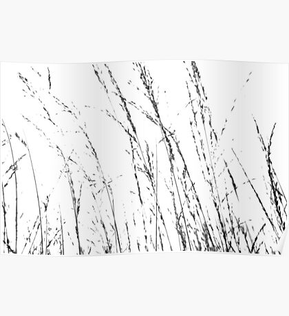 Wild Grasses Abstract in Black and White Poster