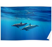 Spinner Dolphins Poster