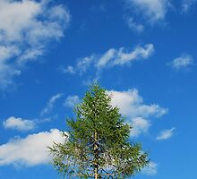Tree with Cumulus Fractus by jojobob