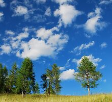 Trees with Cumulus Fractus 3 by jojobob