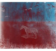 lonely horse in the red field, flying birds, blue, red Photographic Print