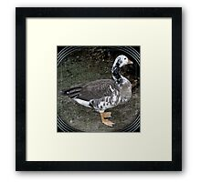 swan goose patches Framed Print