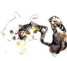Playful Cats by ancapora