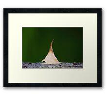 Tiptoe tepee Framed Print