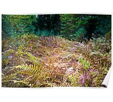 Grove of Ferns Deep in the Woods Poster