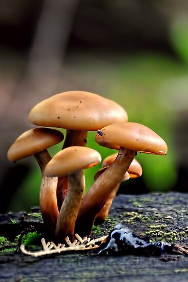 Mushrooms by Heather Haderly