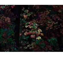 Autumn Foliage 2013 #9018 Photographic Print