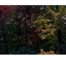 Autumn Foliage 2013 #9017 Photographic Print