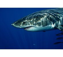 Great White Shark Photographic Print