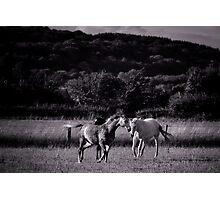 Running Wild Photographic Print