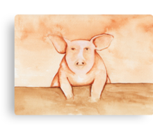 Pig in Watercolor Canvas Print