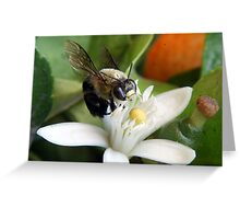 Bee on an Orange Blossom Greeting Card