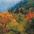 AUTUMN COLOR NEAR THE CHIMNEYS by Chuck Wickham