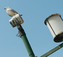 pigeon on lamp by OHphoty