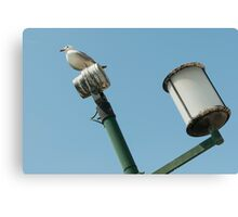 pigeon on lamp Canvas Print