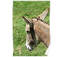 Donkey Head Poster
