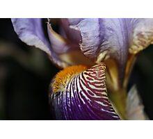 Flower Voices Photographic Print