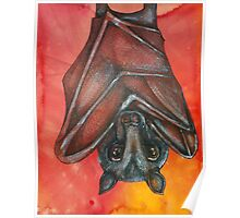 Flying Fox At Rest Poster