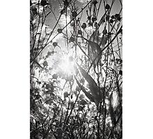 Fall Tangle Photographic Print