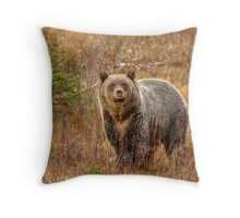 Good looking Grizzly Throw Pillow
