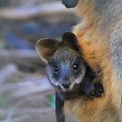 Baby Black Wallaby. by Donovan Wilson