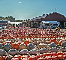 The Black Oak Ridge Road Farmer's Market, Wayne NJ USA by Jane Neill-Hancock