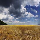 GoldenFields by Wooanna