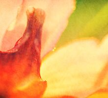 Garden Flower Abstract 1 by Natalie Kinnear
