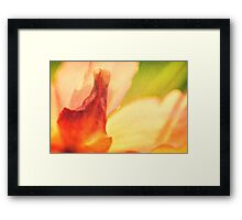 Garden Flower Abstract 1 Framed Print