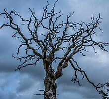 Laid Bare - Westport 2013 by DanButlerPhoto