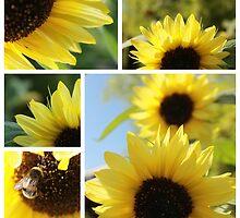 Regent Sunflower 2 by rualexa