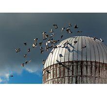 Bird - BIRDS Photographic Print