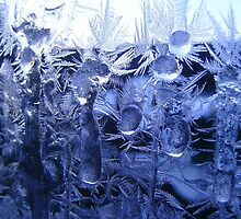 Iceflowers  by ©The Creative  Minds