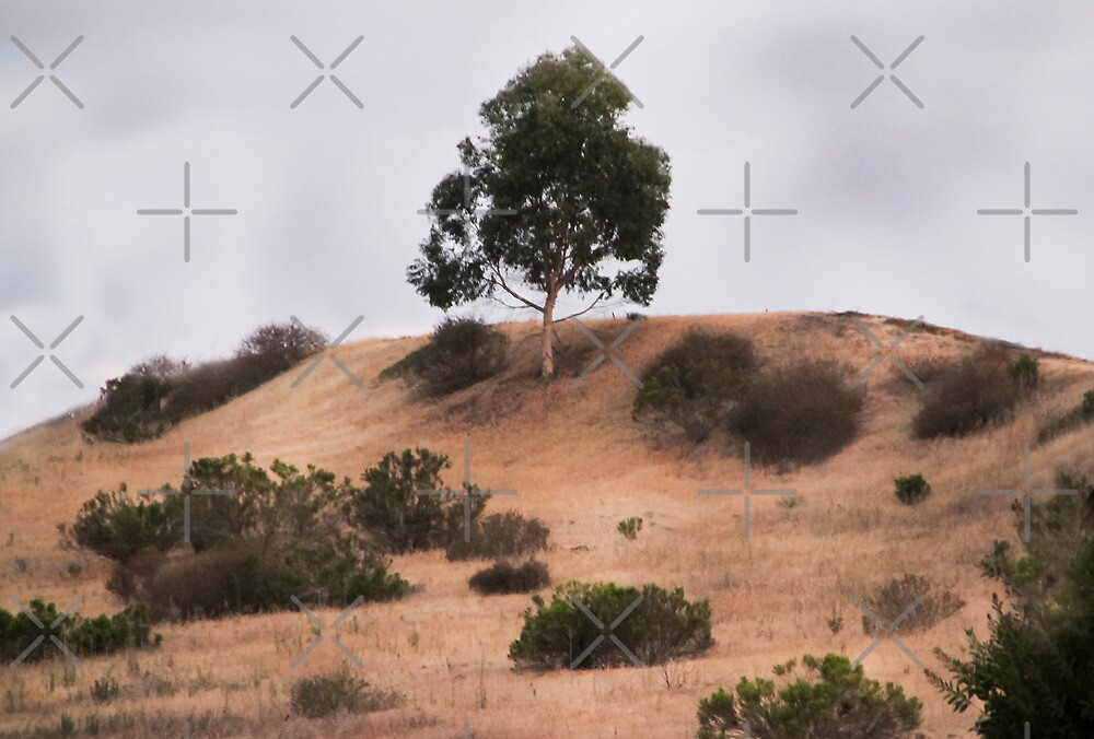 Tree On the Hill, Cloudy Day by Heather Friedman