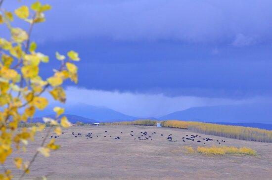 Fall in Rural Alberta 3 by Judy Grant
